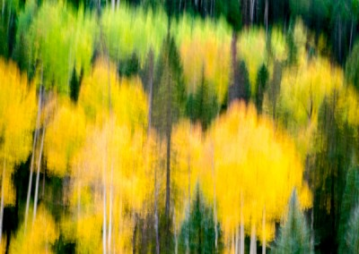 1030143 Autumn Forest #1, Colorado