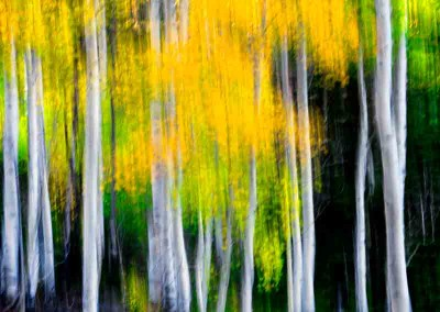 1030525 Autumn Forest #2, Colorado