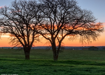 1040730 Two trees, February dawn, LBJ Ranch, Stonewall, Texas