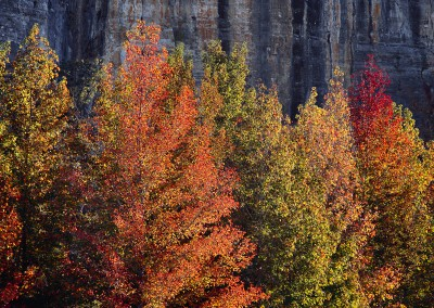 1065 Fall foliage, Ozarks, Roark Bluff, Buffalo National River, Arkansas