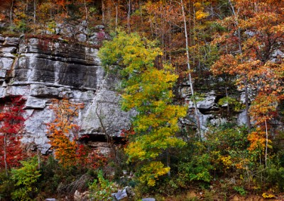 1075 Fall foliage in Ozarks, Roark Bluff, Buffalo National River, Arkansas
