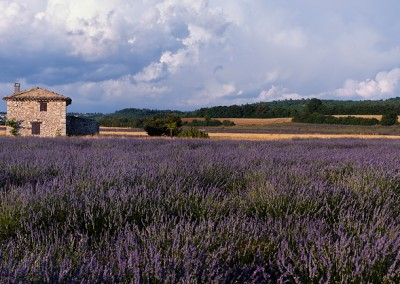 1108 Lavender field and stone house, Provence