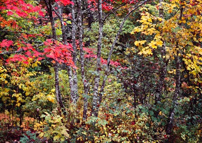 1409 Fall color, West Branch of Penobscot River, Maine