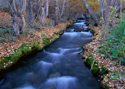 186 Eastern Sierra Stream