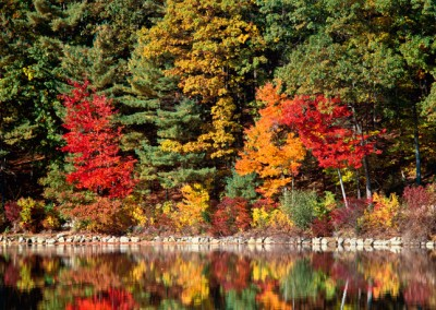 249 Maple trees reflecting, Autumn, Walden Pond