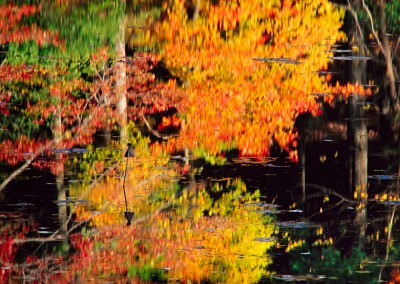 259 Fall reflections on Fairyland Pond, Walden Woods