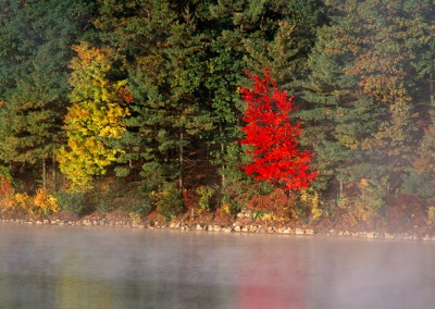 271 Maple trees, fall color, Walden Pond
