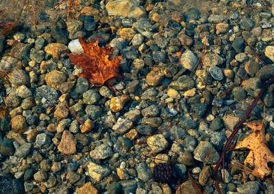 323 Still life under ice, Walden Pond
