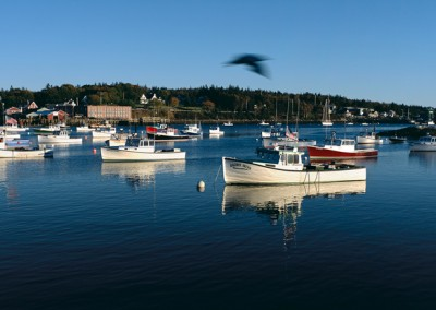 528 Lobster boats in harbor, Downeast Maine