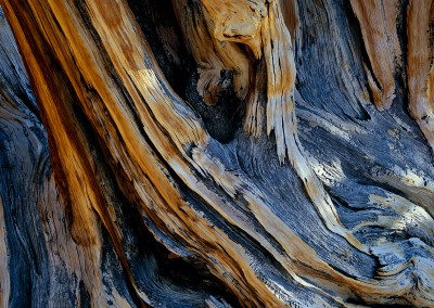 640 Ancient Bristlecone Pine detail, White Mountains, California