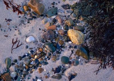 694 Cape Cod still life