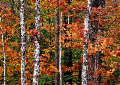 800 Autumn color, Maine Woods