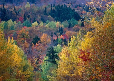 802 Autumn color on mountain, Maine Woods