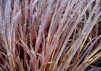 811 Ice-laden grasses, Stonewall, Texas