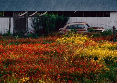 836 Wildflowers and old car, sunrise, Stonewall, Texas