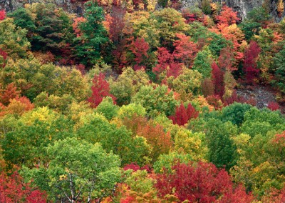 996 Fall foliage, Grand Lake Matagamon, Maine Woods