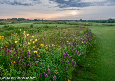 08344 Wildflowers at sunrise, Trinity Forest Golf Club, Dallas, Texas
