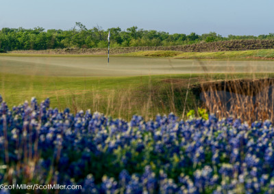 01371 Bluebonnets and golf green, Trinity Forest Golf Club, Dallas