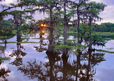 1455 Sunrise through the cypress trees, Caddo Lake, Texas
