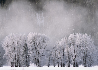 1469 Winter wonderland; ice trees and steam fog, Grand Teton National Park, Wyoming