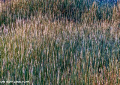 05032 Blue grasses, Blue Rocks, Lunenburg, Nova Scotia, Canada