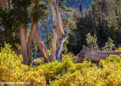05592 Luminosity, John Muir Wilderness, CA