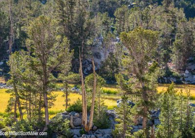 05725 Autumnal tints, John Muir Wilderness, CA
