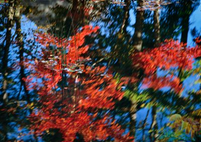 525 Autumn reflections #2, Mt. Desert Island, Maine