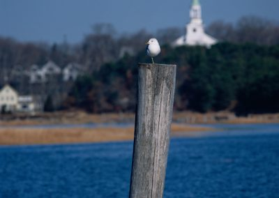 700 Bird on one leg, Wellfleet, Cape Cod, MA