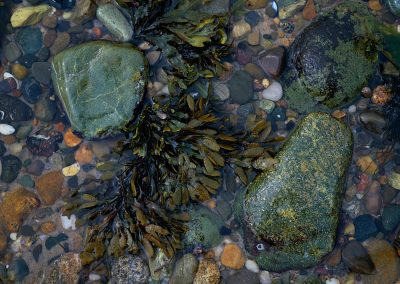 716 Crystalline waters, seaweed and pebbles, Cape Cod National Seashore, MA