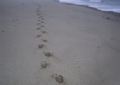 722 Footsteps in the sand, Atlantic Ocean beach, Cape Cod National Seashore, MA