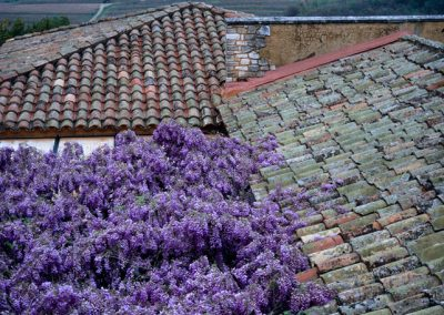 880 Purple wisteria, rooftops and countryside in Roussillon, France