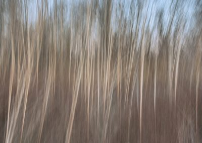 05572 Winter trees abstract, Great Trinity Forest, Dallas, TX