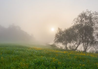 00188 Foggy spring sunrise, Great Trinity Forest, Dallas, TX, PANORAMA