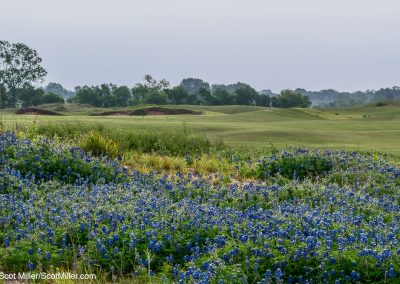 06930 Bluebonnets and fairway, Trinity Forest Golf Club, Dallas, TX