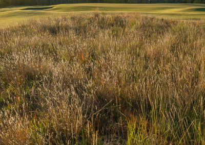 04258 Autumn color, vertical, Trinity Forest Golf Club, Dallas, TX