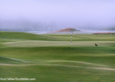 09023 Black crow by 5th green, foggy morning, Trinity Forest Golf Club, Dallas, TX