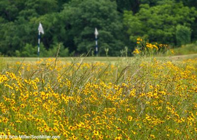 3280792 May wildflowers, Trinity Forest Golf Club, Dallas, ,TX