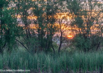 03007 June sunrise at John Bunker Sands Wetland Center, Seagoville, Texas