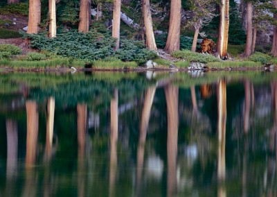 572 Evening reflections, wilderness lake, Yosemite National Park